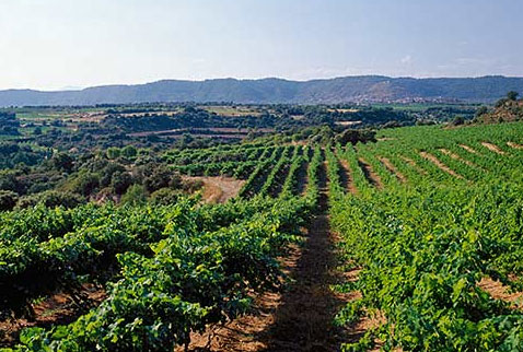 виноделие испании