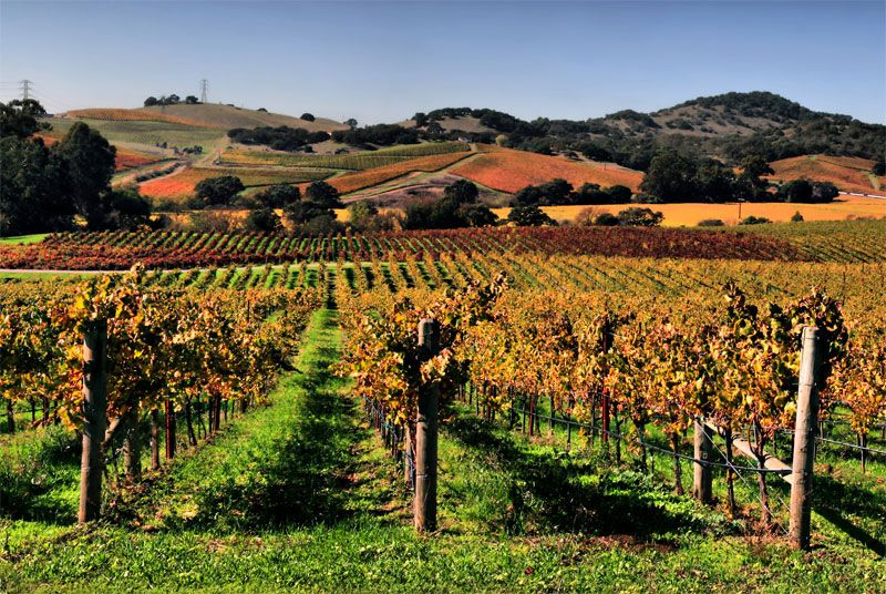 вина калифорнии